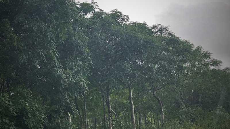 hur binder träd koldioxid
