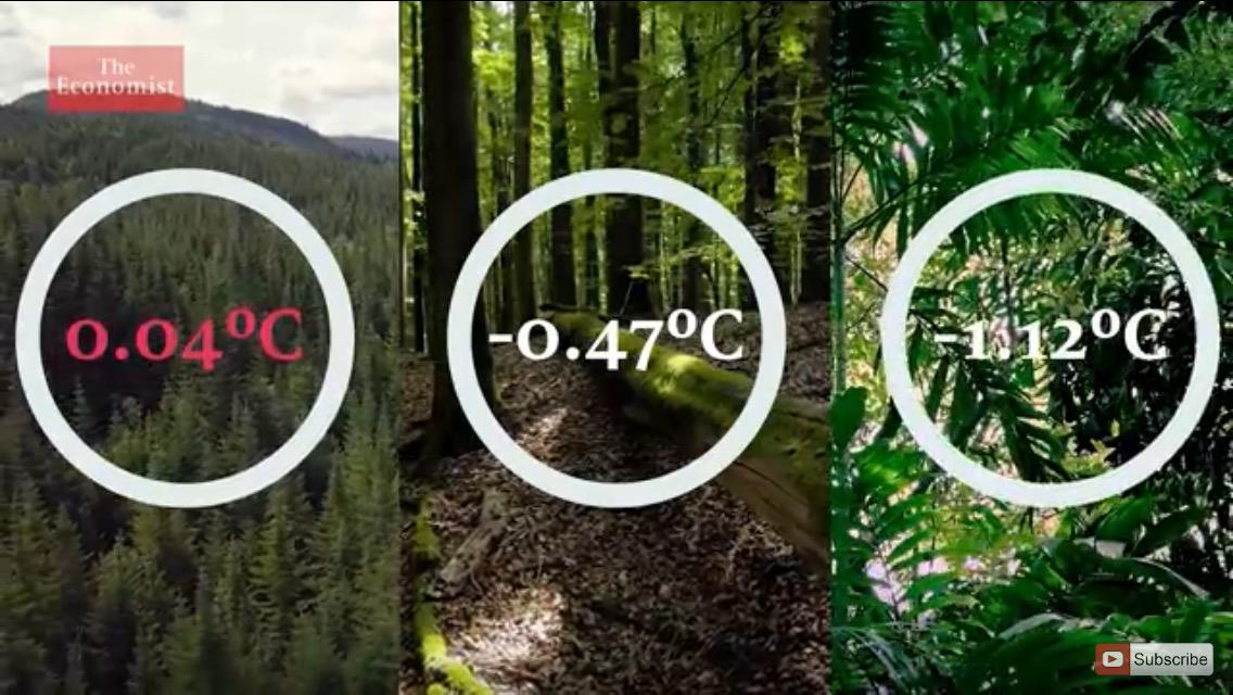 Att plantera träd i tropiska områden är bäst